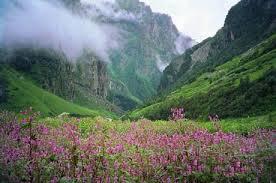 Image result for nanda devi national park
